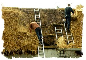 Modern day thatching - picture from the Daily Mail